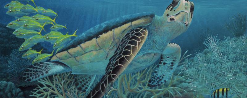 """New Rick Bogert Painting """"Tortuga"""""""