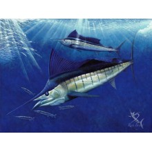 Sailfish Ball