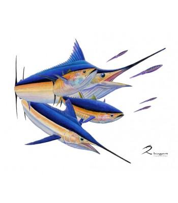 Calcutta Blue Marlin White Marlin Tuna