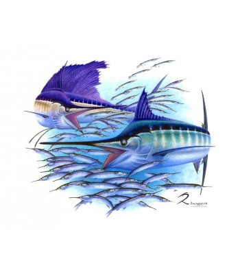 Cincuenta Striped Marlin Sailfish Ballyhoo