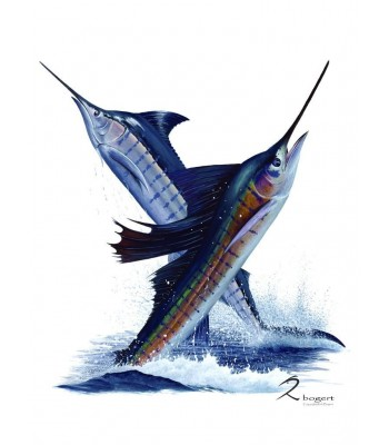 Jump Marlin Sailfish Costa Rica