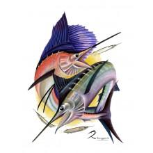 Sailfish Striped Marlin