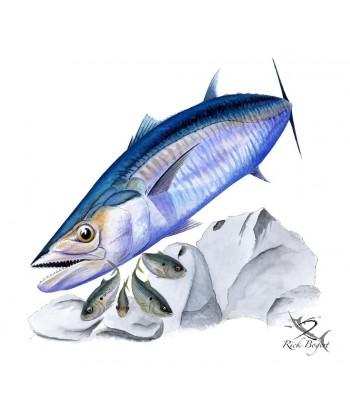 Southern King Kingfish
