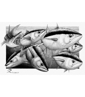 Fins Tuna Mako Shark